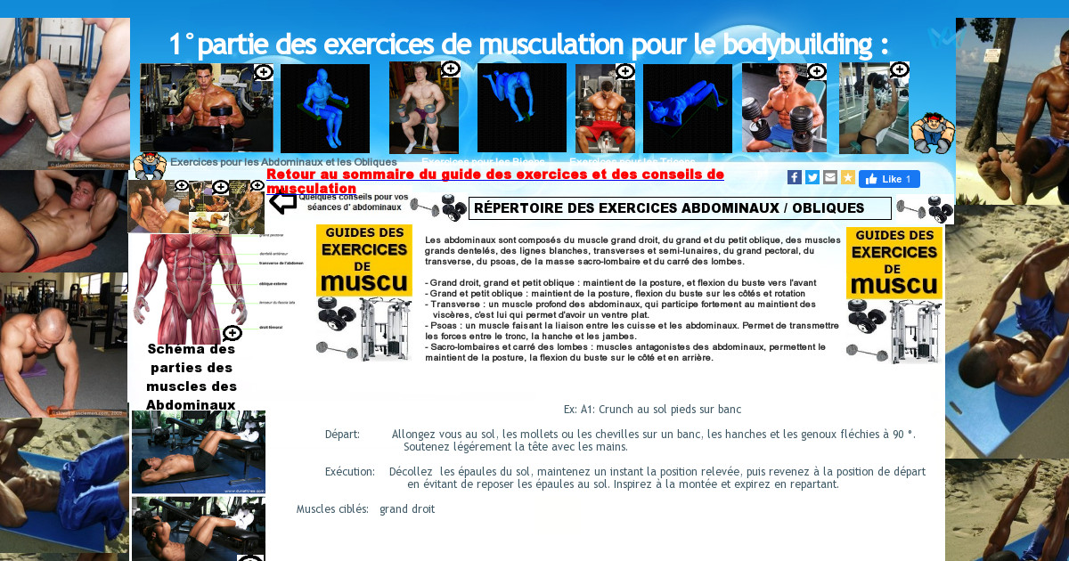 Exercices de musculation en bodybuilding 1 partie for Exterieur biceps